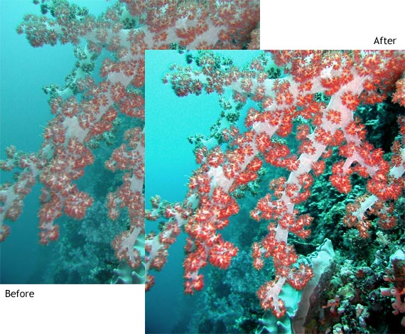 Underwater coral before and after color balance